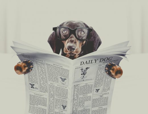 dachshund sausage dog reading a newspaper magazine ,in bedroom in bed with retro vintage style filter, wearing reading glasses